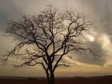 sad-tree-kufr